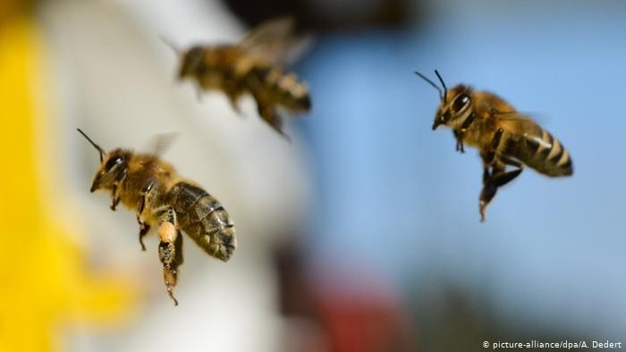 US Pesticide Harms Pollinators Drastically, Reports A Study